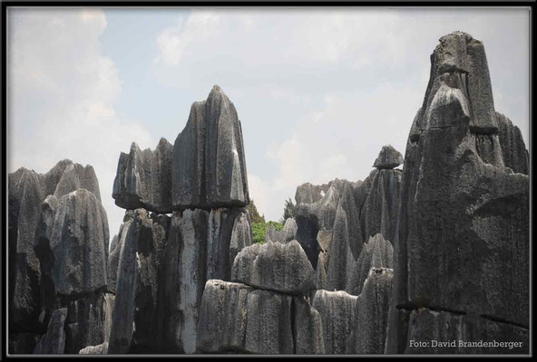 C0805Stone Forest