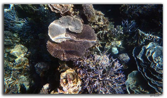 AU0376.Coral Bay.Korallen