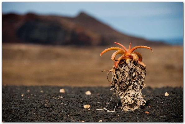 LAN072.Kaktus