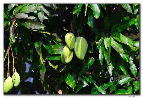 VN0382.Mekong Nebenarm.Mangos