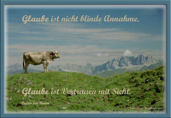 S0092.Kuh,Drusenfluh,CH