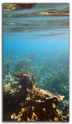 AU0377.Coral Bay.Korallen
