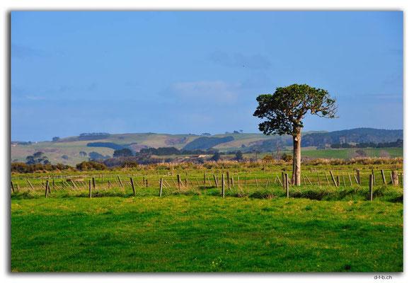NZ0065.Felder vor Ruawai