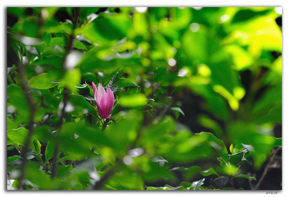 NZ0429.Mount Lees Reserve.Blume