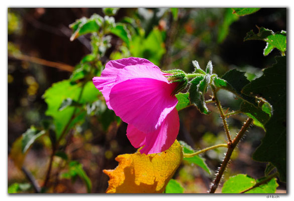 AU00126.Katherine Gorge.Butterfly Gorge