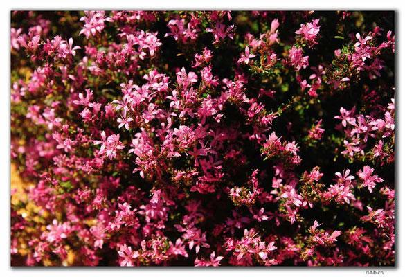 AU0895.Ten Mile Rock.Blumen