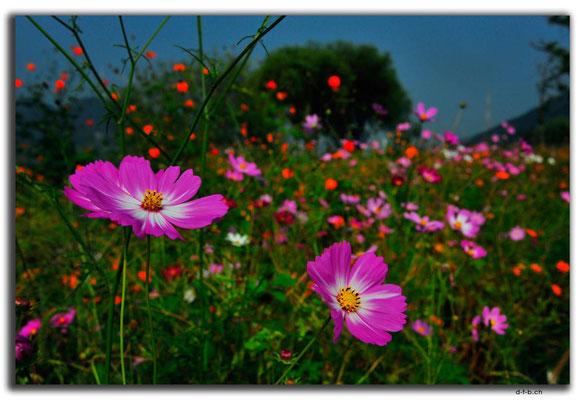 KR0144.Blumenwiese