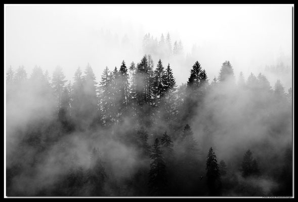 A0628.Nebel im Wald.Klosters.CH