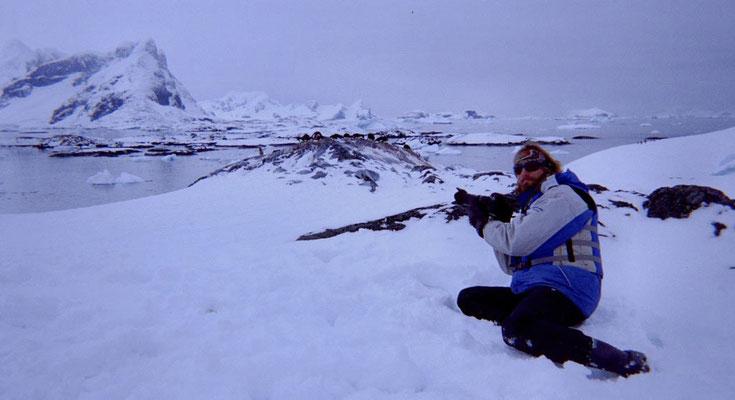 Antarktis, Adelierookerie