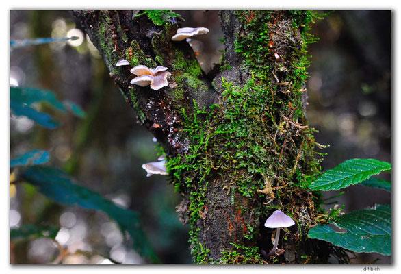 AU1479.Bemm River Rainforest Walk