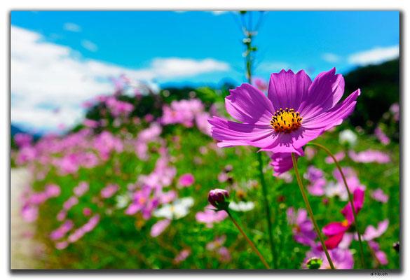KR0135.Blumen