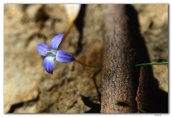 AU1067.Mt.Remarkable N.P.Blume