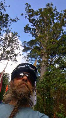 NZ: Solatrike im Kauriwald