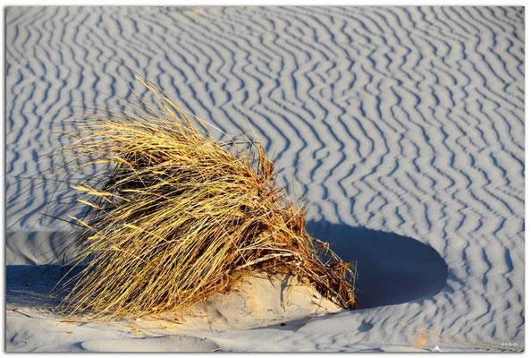 DE107.Amrum.Sandmuster