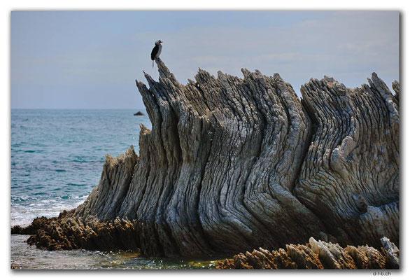 NZ0700.Kaikoura.Shag on the rocks