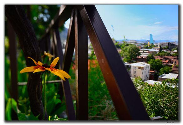 GE0150.Tbilisi.Blume