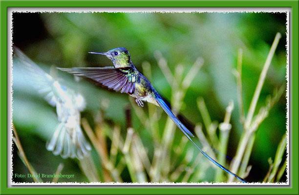 128.Kolibri,Mindo,Ecuador