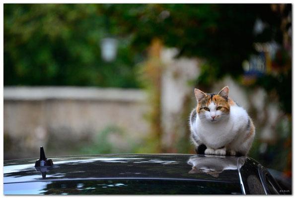 DE173.Rothenburg ob der Tauber.Katze