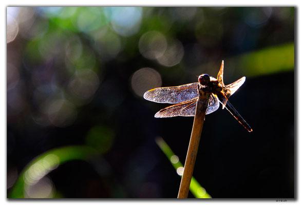 KR0124.Libelle