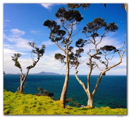 NZ0222.Taranga Island