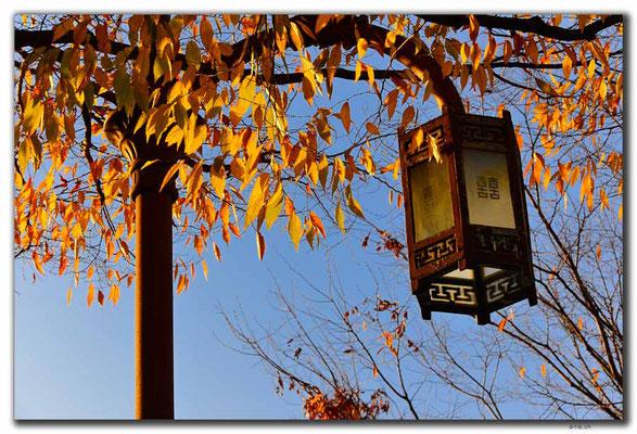 KR0288.Busan.Herbst