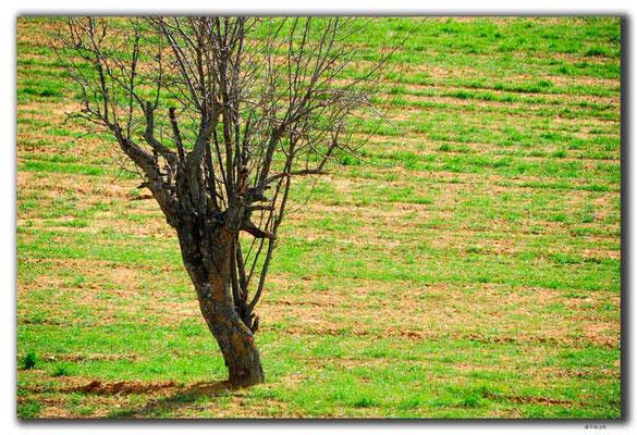 TR0090.Baum im Feld