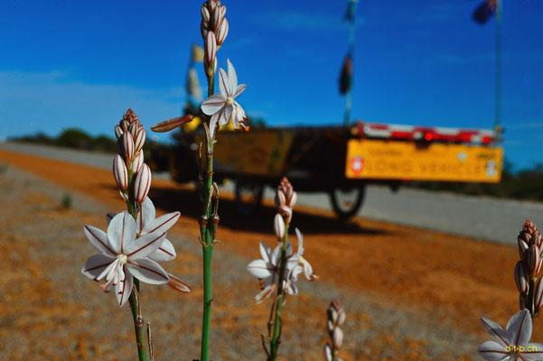AU:Solatrike und Wildblumen