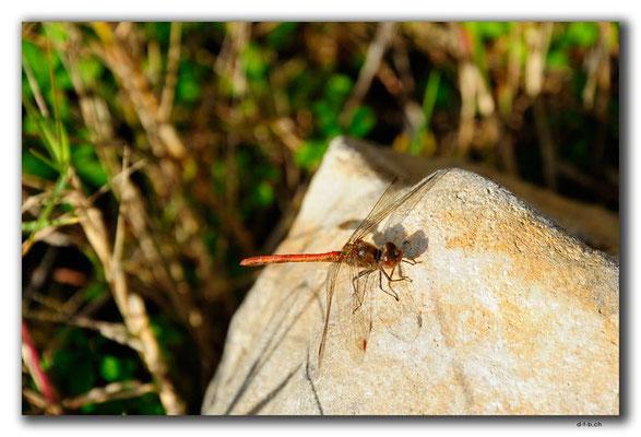 GR0480.Kournas-See.Libelle