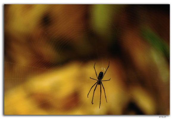 FJ0031.Garden of Sleeping Giant.Spider