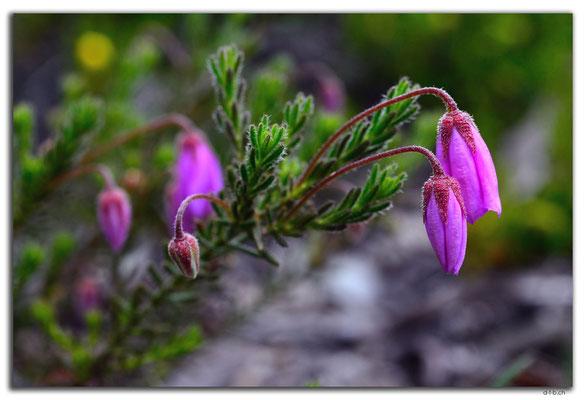 AU0661.Mt.Observation.Blume