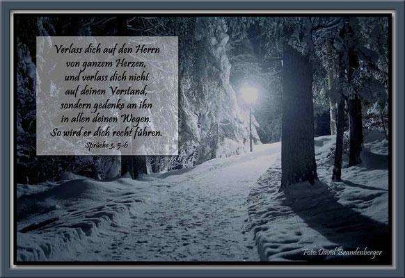 S0023 Waldweg im Winter,Flims,CH.Sprüche 3. 5-6