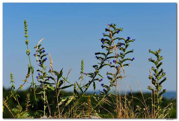PL059.Blumen auf Jurakalk