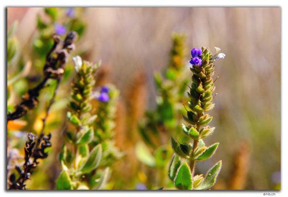AU0325.Karratha.Blume