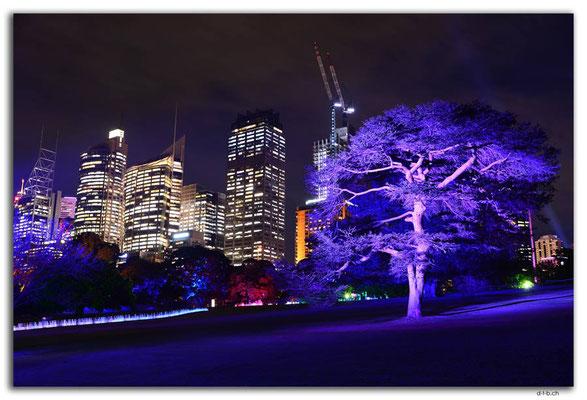 AU1577.Sydney.Vivid.Installation