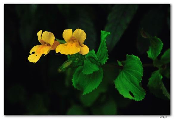 NZ0888.Bluff.Flower