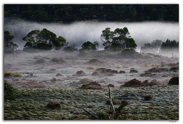 AU1361.Overland Track.Windemere Hut.Morning Mist
