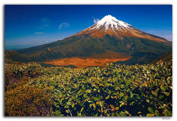 NZ0375.Egmont N.P.Mt.Taranaki