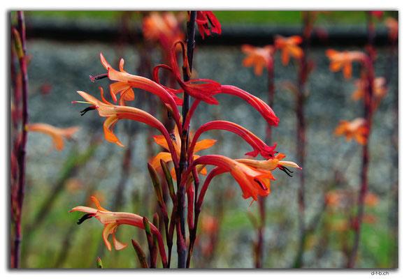AU0736.Waroona.Blume