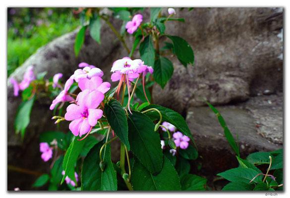 VN0162.Hue.Citadel.Co Ha Garden