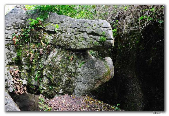 NZ0560.Labyrinth Rocks. The Iguanodon Head