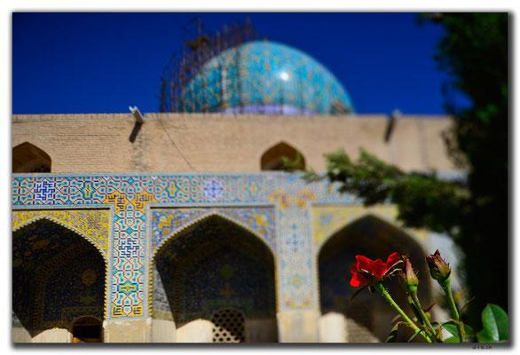 IR0075.Isfahan.Rose