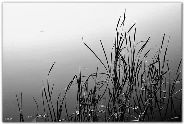 CZ031.Schilf.Velka Laguna