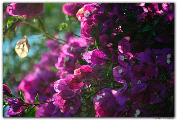 LAN055 Blumenwand