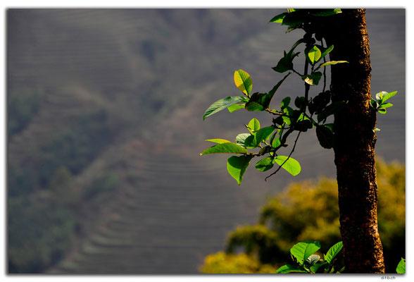 VN0059.Sapa.Muong Hoa Valley