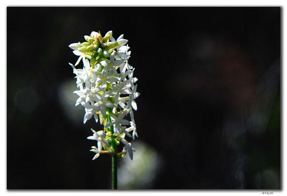AU0567.Grigsons Lookout.Blume