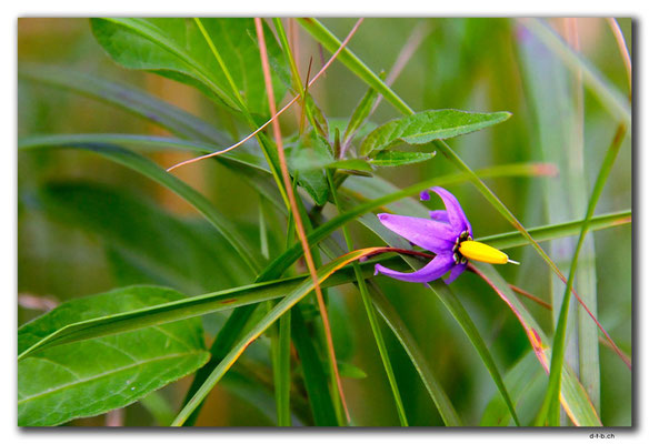 PL307.Leba.Blume
