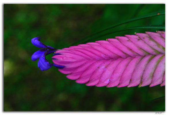 ID0133.Ubud.Blume