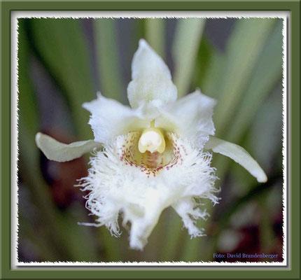 76.Orchidee,Mindo,Ecuador