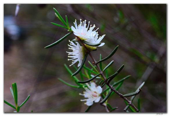 AU0647.Mt.Observation.Blume