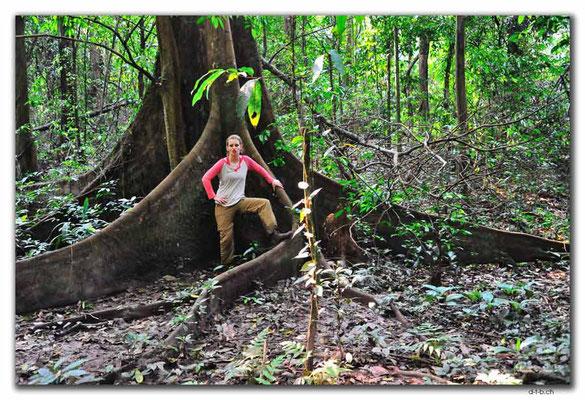 VN0140Ma Da-Valley.Riesenbaum